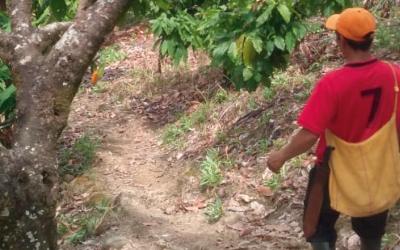 Se reanudan las visitas de campo de asistencia a agricultores en Caquetá