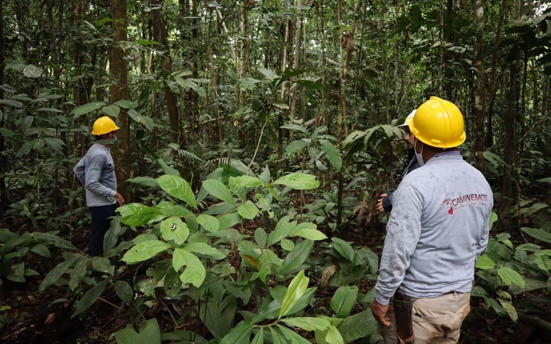 Conservación de bosques para caminar hacia una Amazonía sostenible en Guaviare